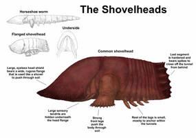 REP: The Shovelheads