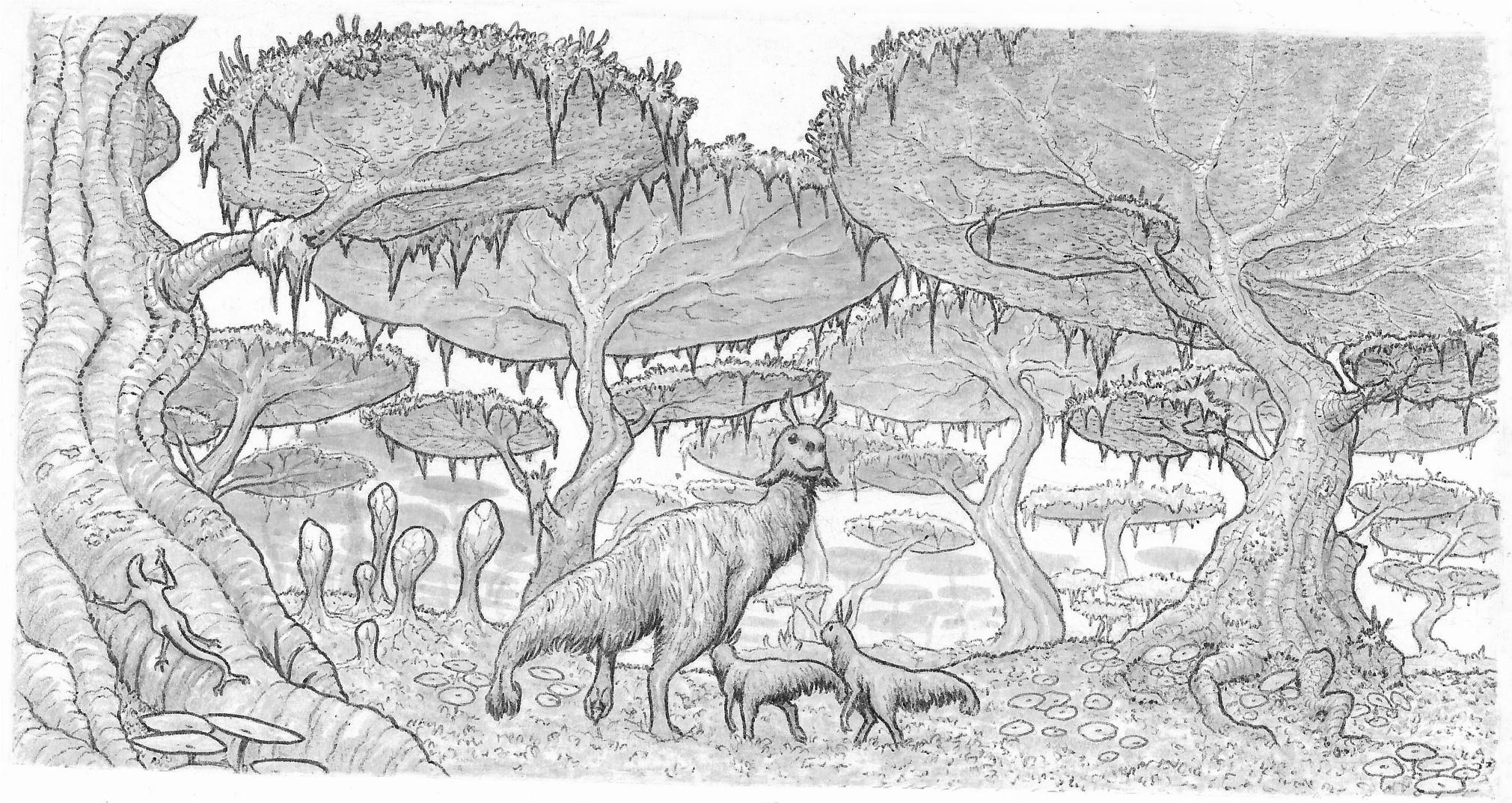 Shroom forest