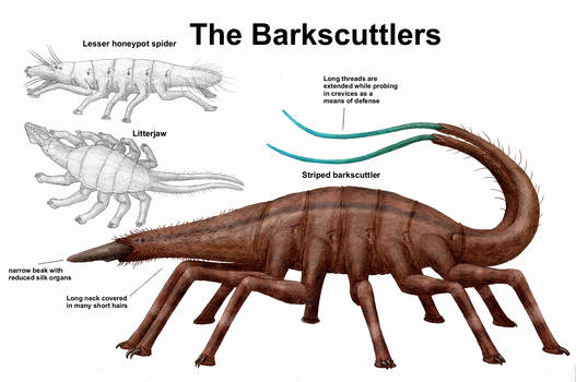 REP: The Barkscuttlers
