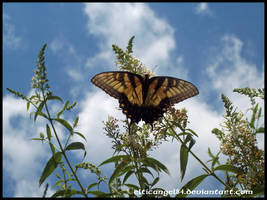 Butterfly by CelticAngel84