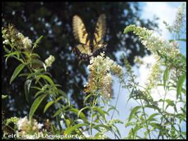 Butterfly 2 by CelticAngel84
