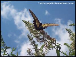 Butterfly 3 by CelticAngel84