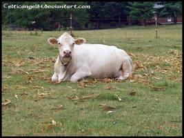 Cow by CelticAngel84