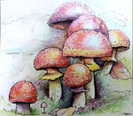 Crazy mushrooms