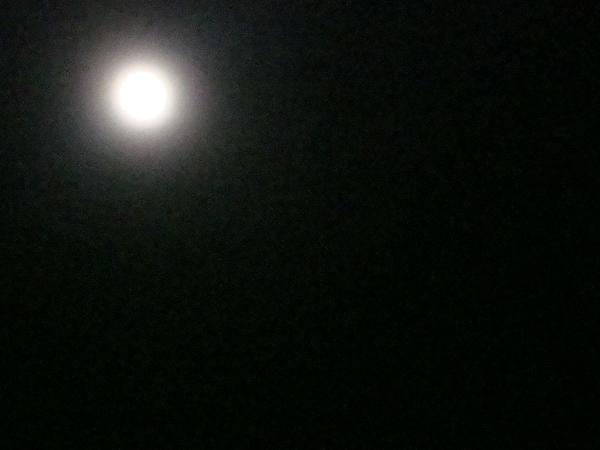 Luna by shesraia
