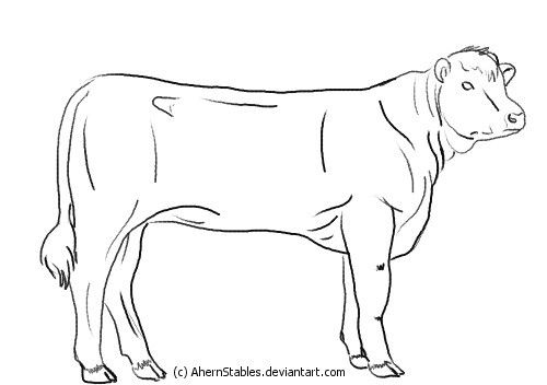 Line Drawing Cow : Young hereford cow line art by ahernstables on deviantart