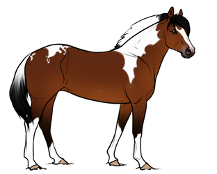 A170 AS Raynbow by AhernStables