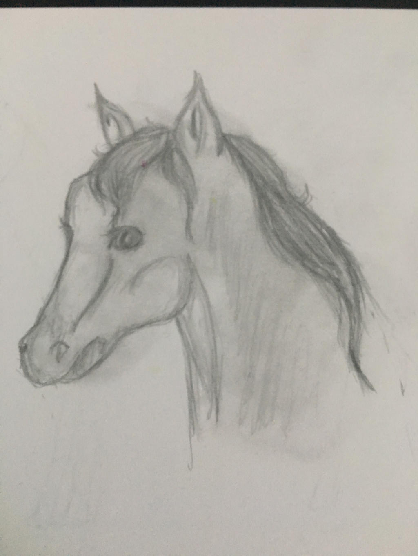 Horse Sketch by arRagdoll