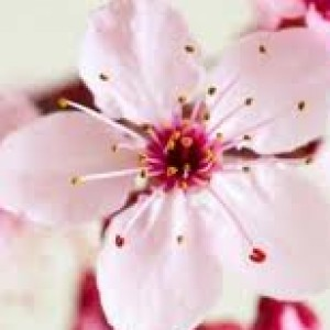 SPPnelk82's Profile Picture