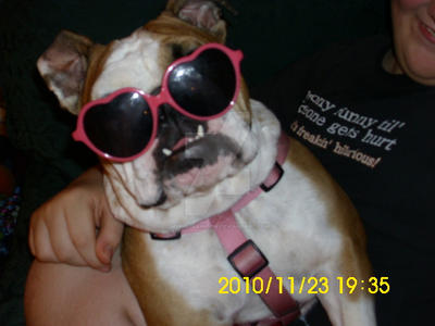 Georgia Bulldog Chat Rooms