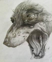 Water Dog (Pencil) by kyrisnowpaw