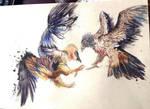 Bearded Vultures