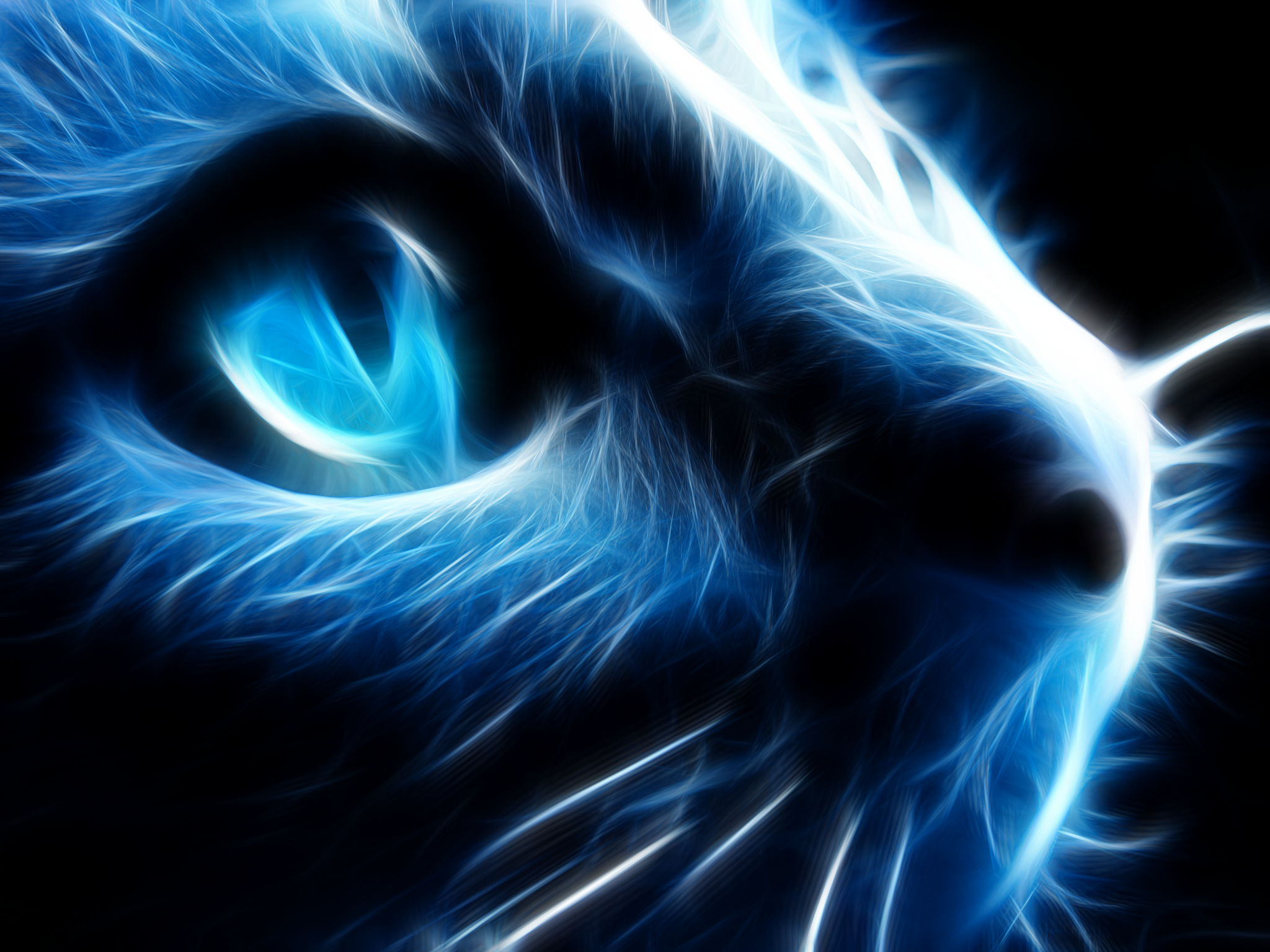 Cool Wallpaper Night Cat - night_cat_reloaded_by_l3viathan2142-d38r6h0  Photograph.png
