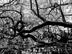 Twisted Bough