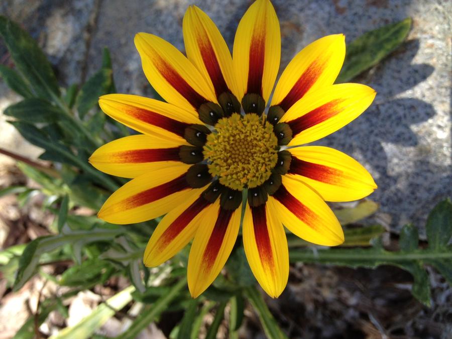 Sunflower #3 by Sugerpie56