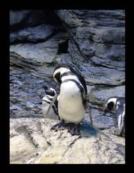 Pinguim...