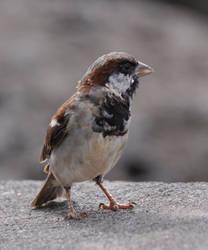 Sparrow Hires