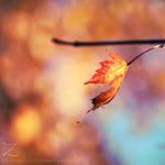 fall.in.colors.II