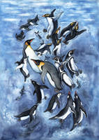 penguins of the world by kiriOkami