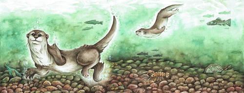 Otter by kiriOkami