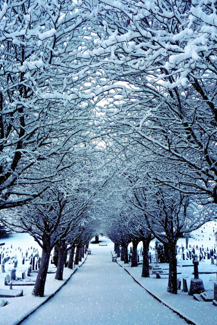Winter Silence (Re-uploaded) by AFoxCalledAndrew
