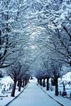Winter Silence (Re-uploaded)