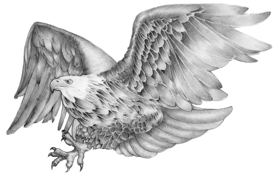 flying eagle drawing