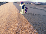 Tiny Bon Bon watching the sunset [PIRL]