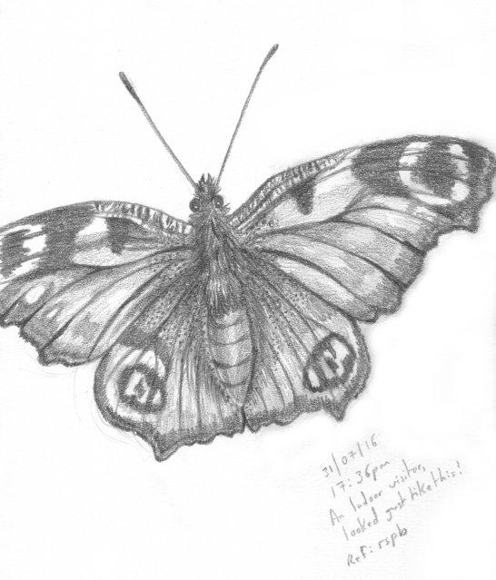 Peacock Butterfly by Psyfira