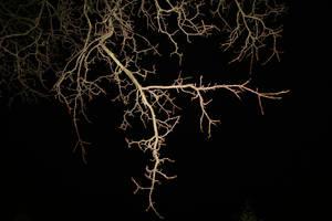 night tree stock II by LeandrasStock