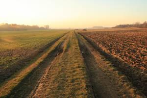 field stock II by LeandrasStock