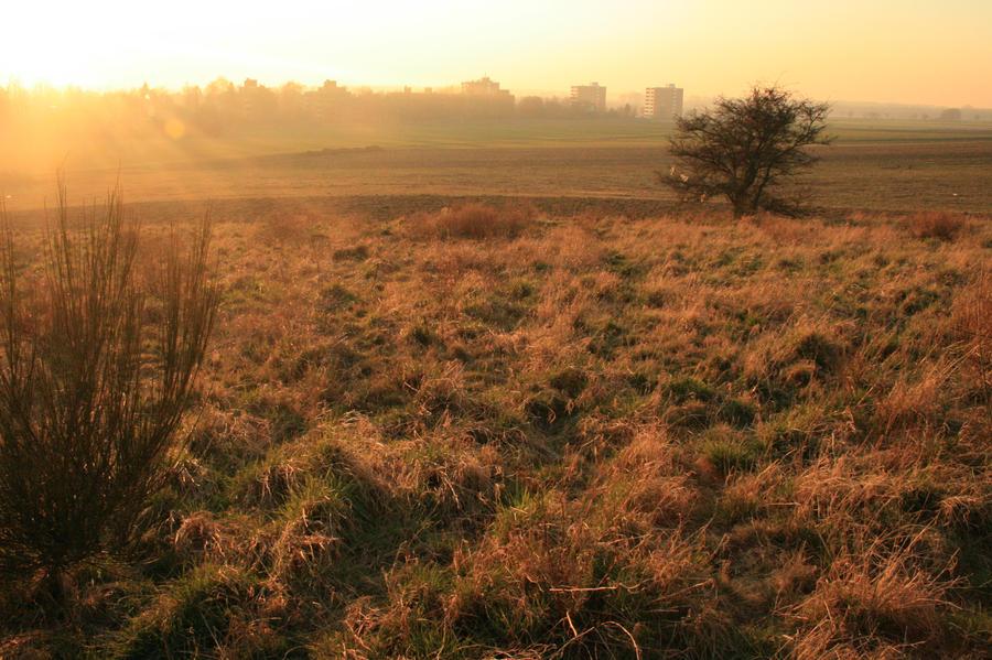 field stock III by LeandrasStock
