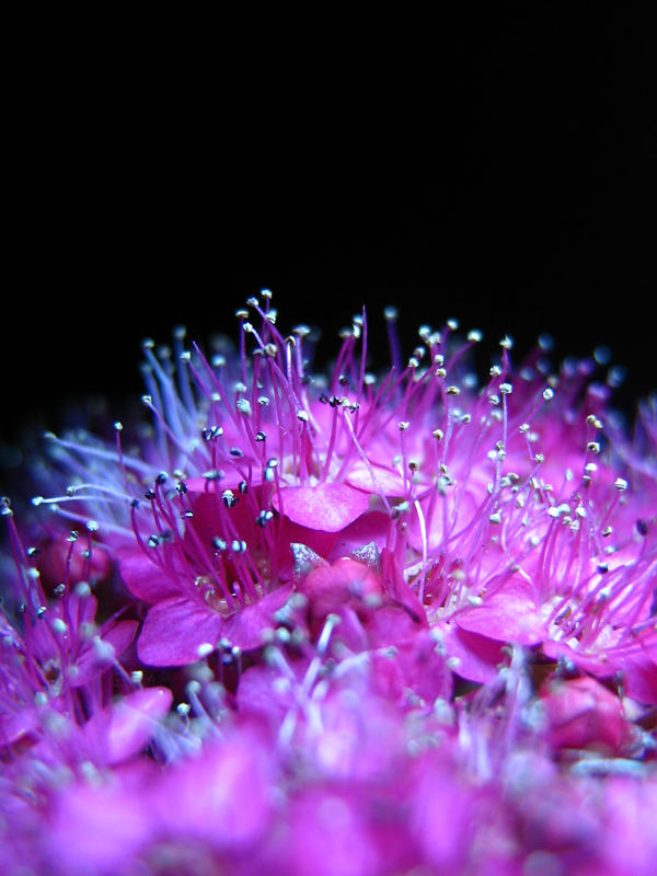 Imagenes en violeta....