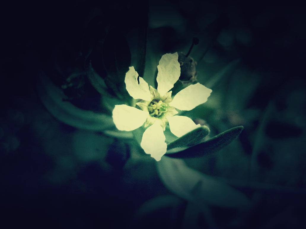Just Flower by redrackham on DeviantArt