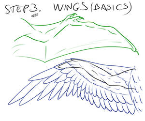 Tutorial 3: wings (basic types)