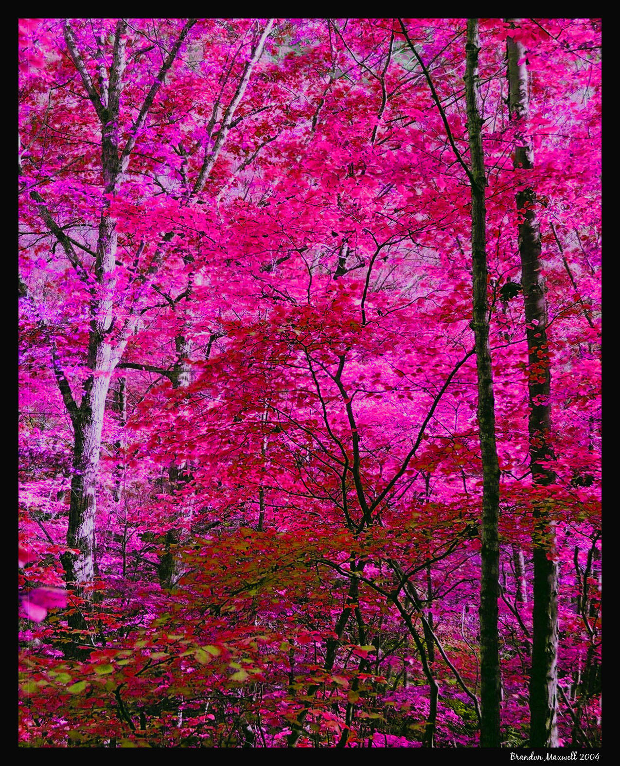 pink trees by pathos1 pink trees by pathos1 - Pink Trees