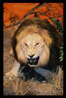 lion by pathos1