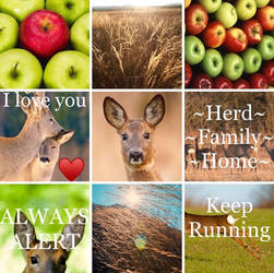 Roe Deer Aesthetic Board by SungRyeong-ie