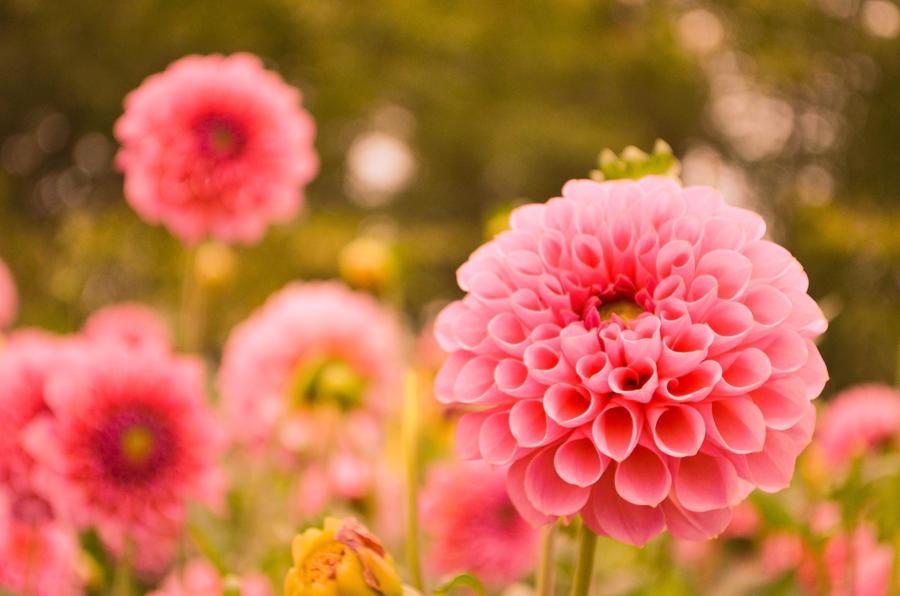 Flower by fkendi