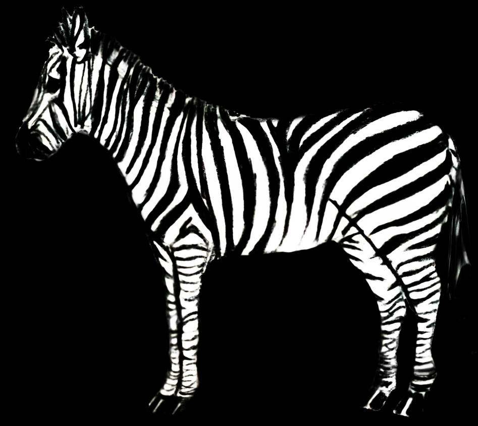 Zebra by JuliaJacobss