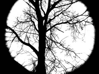 Tree by Sudlice