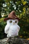Owl named Wu 2