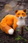 Fox felt sculpture, Fox named Finn 2