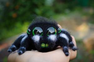 Cute Spider Needle Felted Phidippus regius Black