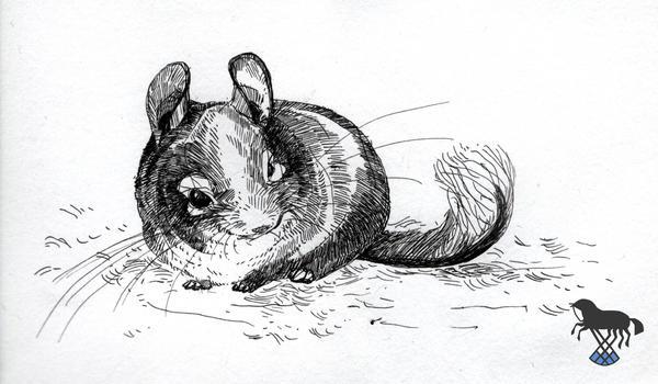 Some chinchilla sketch