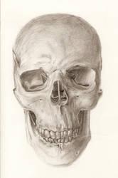 Skull by autumnsdominion