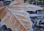 Frozen Maple by JennytheTurtle