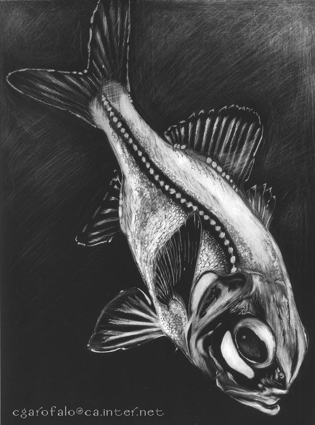 Scratchboard Fish by RRosario on DeviantArt