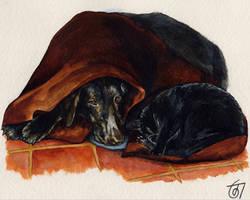 Snuggle by JaniceDuke