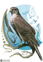 Sparrowhawk by JaniceDuke